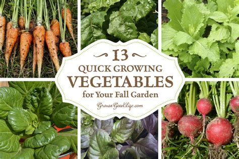 Craftionary Fall Garden Vegetables