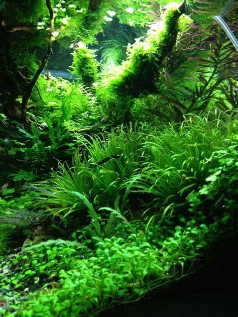fish tank aquascaping 573 best aquariums aquascapes images on pinterest fish
