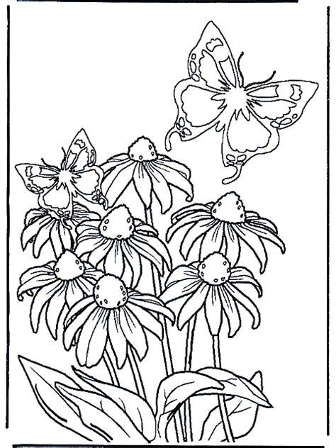 fiori e farfalle disegni fiori e farfalle disegni da colorare risorse categoria