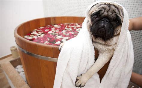 layout de hotel para cachorro hot 233 is para cachorros 28 02 2018 cotidiano