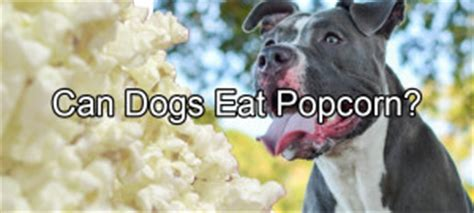 can dogs edamame pethority the authority for all your pet needs