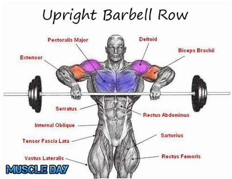 shoulder exercises upright barbell deltoid rows day