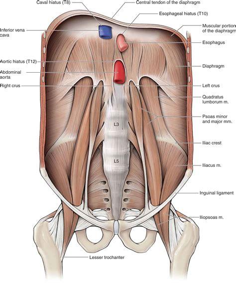 hip musculoskeletal key
