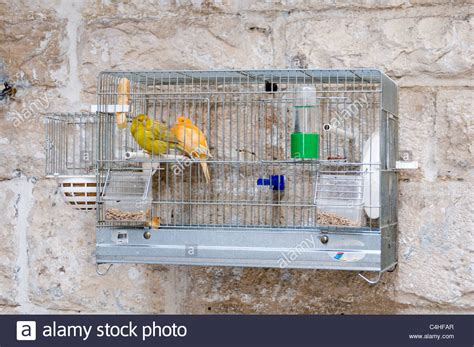 canary bird cage stock photos canary canneries cage caged cages bird birds pet birdcage