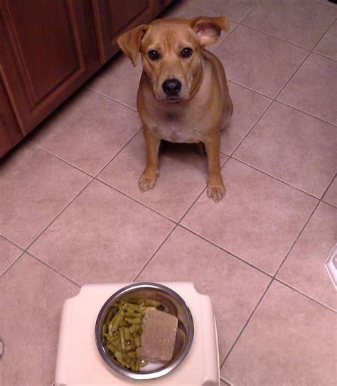 dogs and asparagus paleo archives paleo lifestyle doctor