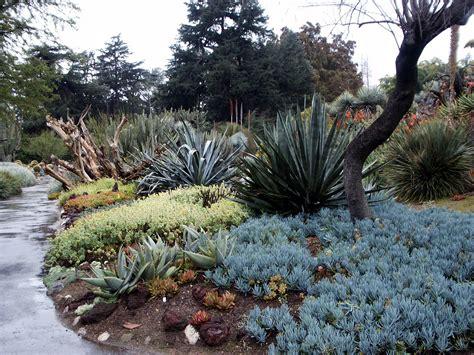 agave senecio mandraliscae blue chalk stick succulents