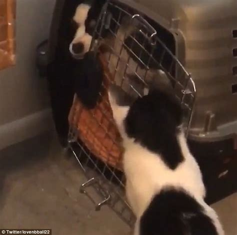 Your Escape From The Boring Black Carrier by Sneaky Cat Jailbreaks Dogs From Pet Carrier In Clip