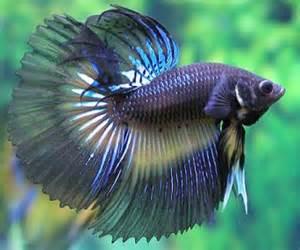 Fish S Fish