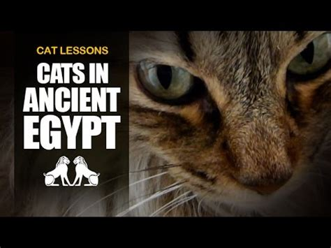 10 facts about cats in ancient