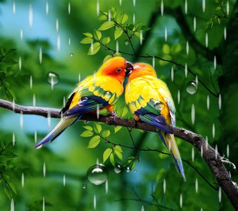 rainy bird live wallpaper android apps on google play