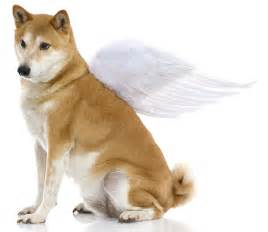 Pictures of pets in heaven pets in heaven are no sad dogs in heaven