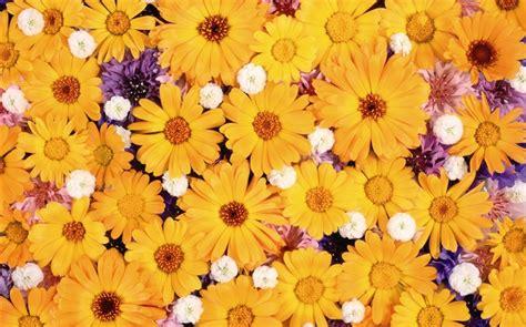 imagenes flores impresionantes rodeado de flores impresionantes fondos de escritorio 4