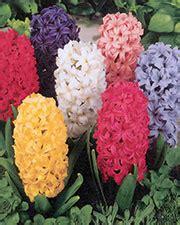 fiori molto profumati il giardino romantico scopri quali fiori sono pi 249 in
