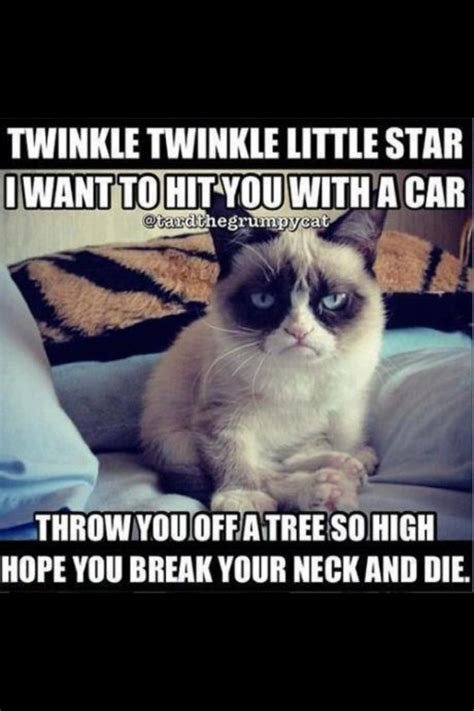 cat songs songs to sing to your cat and other feline favourites books grumpy cat song and cat pics