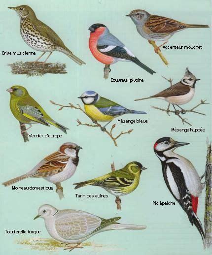 Nourrir Oiseaux Jardin by Comment Nourrir Les Oiseaux Au Jardin Le De Loukoum