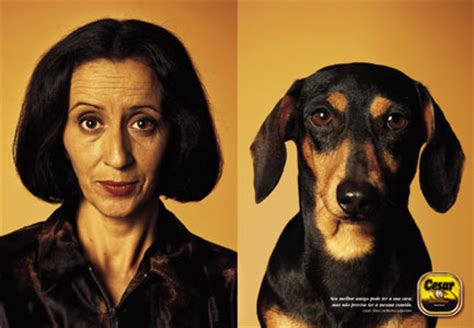 who look like their dogs owners who look like their dogs