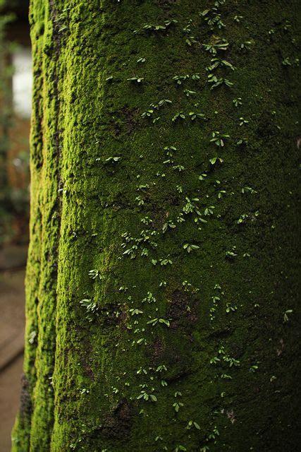 maisons nature et bois 4058 moss mousse vert et for 234 t