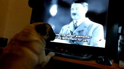 natzi pug teaches pug to do salute when he said sieg heil gets arrested metro news
