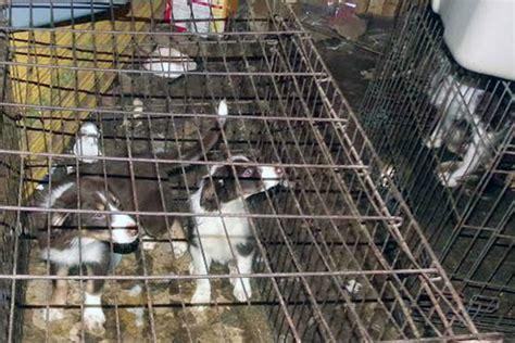 puppy mills in nj christie sends back puppy mill bill cites constitutional concerns nj spotlight