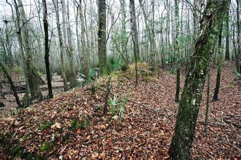 buried  history secrecy protects local indian mounds news postandcouriercom