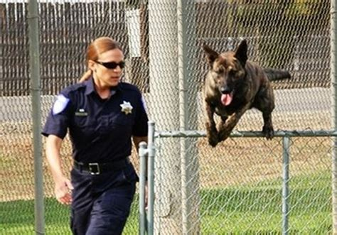 K9 Officer by 5 Tips For Joining A K 9 Unit In Enforcement