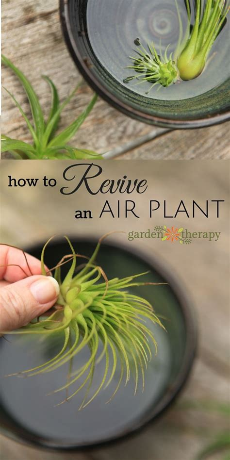 how to revive a plant 35 best my plants images on pinterest gardening indoor