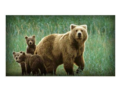 imagenes animales terrestres animales terrestres y acu 225 ticos im 225 genes y caracteristicas