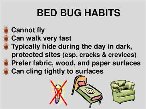 where do bed bugs hide during the day bed bug biology and research by dr susan jones at cobbtf