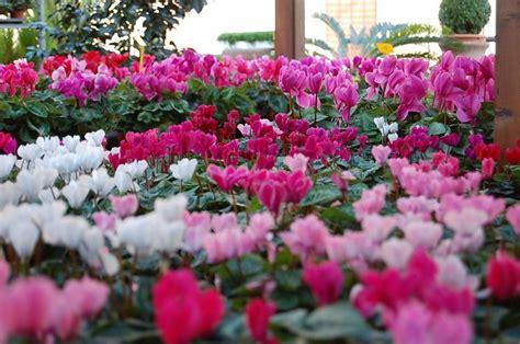 fiori particolari da giardino fiori da esterno giardinaggio fiori da esterno