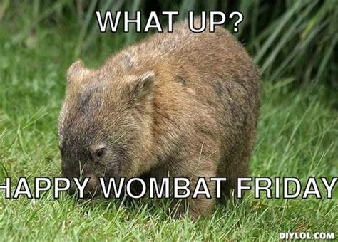 Wombat Memes - a view from the beach wombat s friday news