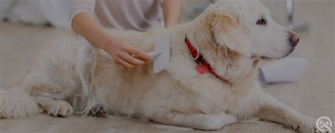 grooming courses grooming course sle practical assignments qc pet studies