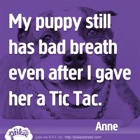 my has bad breath my puppy has bad breath pi ikea st