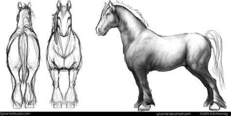 animal model sheet model sheets   horse sketch character model sheet wood carving
