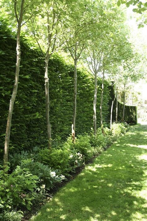 trees for backyard privacy 10 different and great garden project anyone can make 6