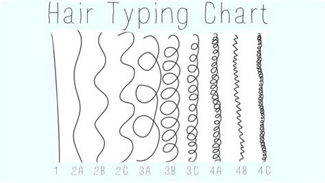 Hair Types Chart Hair by Hair Chart Hergivenhair