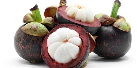 kabar gembira  buah manggis berekstrak
