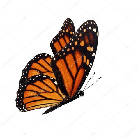imagenes mariposas volando para hi5 mariposas monarcas volando www imgkid com the image