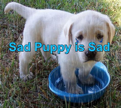 sad puppy gif sad puppy gif 3 gif images
