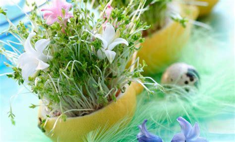 fotografie di fiori primavera fotografie di fiori primavera 28 images fotografie di