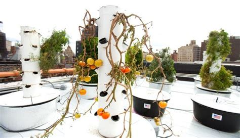 Bell Book And Candle Restaurant Rooftop Garden by From Roof To Table Bell Book Candle S Aeroponic Garden