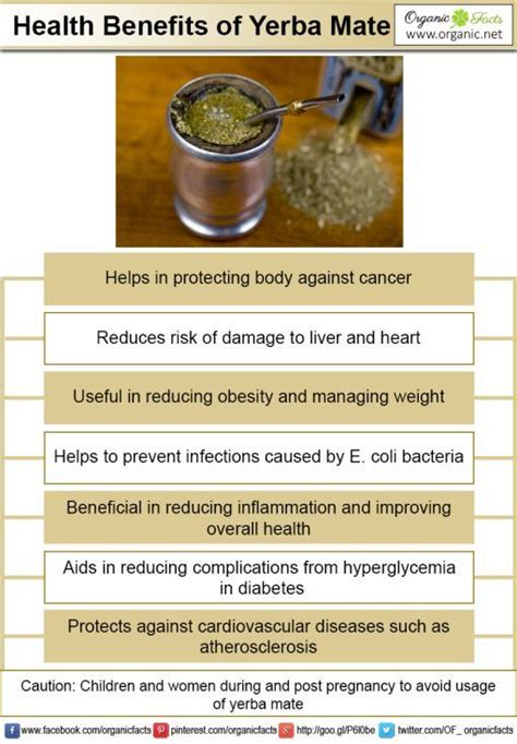 Yerba Mate Weight Loss by 25 Best Ideas About Yerba Mate On Mate