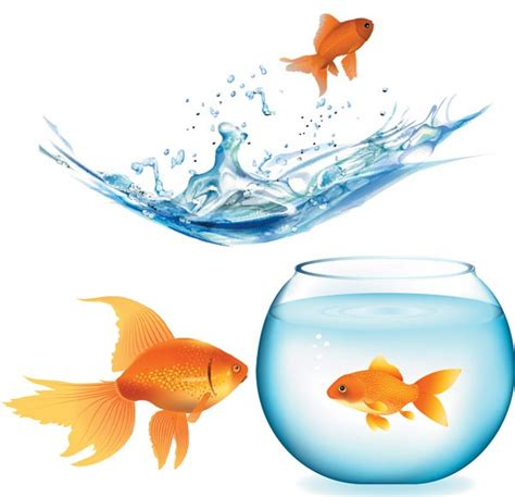vector goldfish tutorial goldfish and aquarium vector material my free