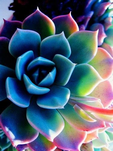 succulent facts interesting facts about flowers http gdurl tk 5z