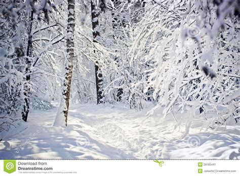 imagenes de invierno winter forest stock image image 29165441