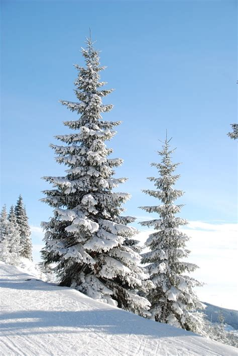 free photo winter snow tree den free image on