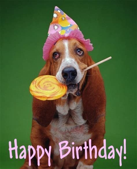 dogs birthday birthday birthday colorful birthday picture s world