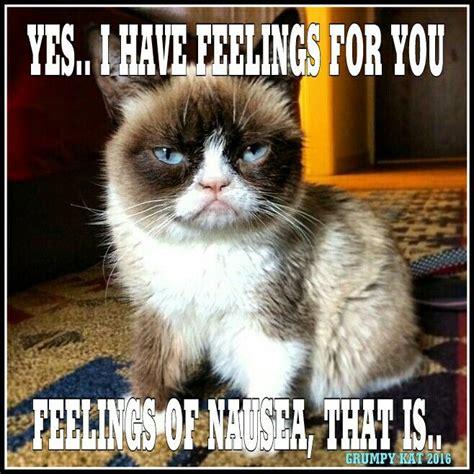 Create A Grumpy Cat Meme - 6643 best grumpy cat images on pinterest grumpy kitty