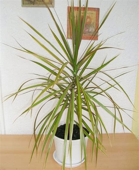 The Livingroom Candidate 10 houseplants which will clean indoor toxins organically