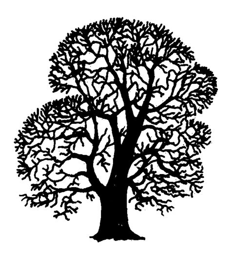 Tree Stencil For Wall Mural file quercus robur silhouette oddsock png wikimedia