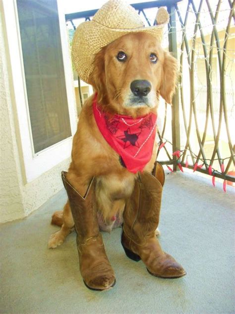 golden retriever costume for humans create a free website or a line puppys and